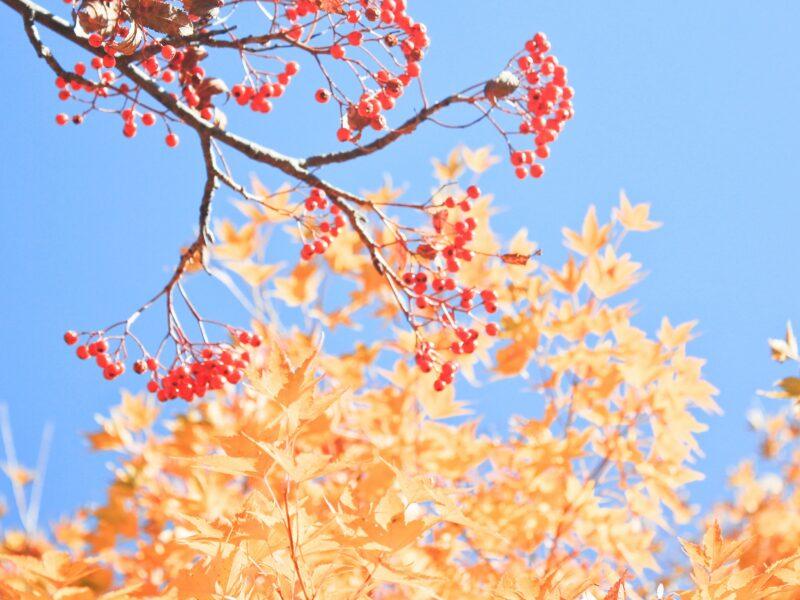 aquilea-otoño